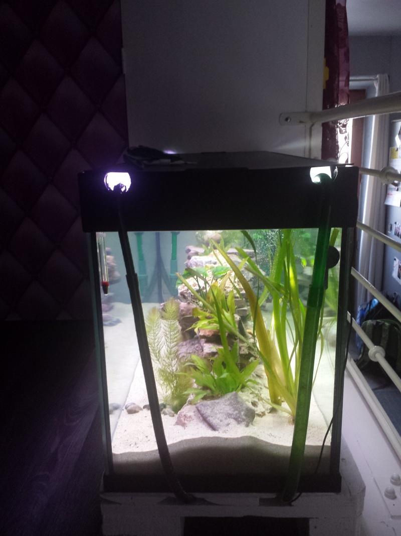 Aquarium Juwel 240 litres cichlidés - Page 2 20150527