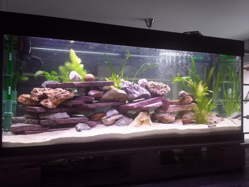 Aquarium Juwel 240 litres cichlidés - Page 2 20150530