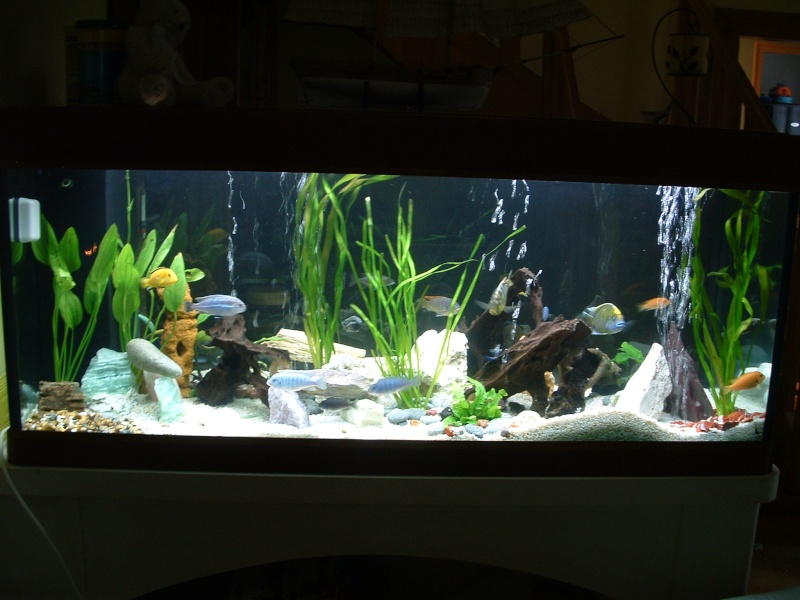 Nouveau aquarium Css1mo10