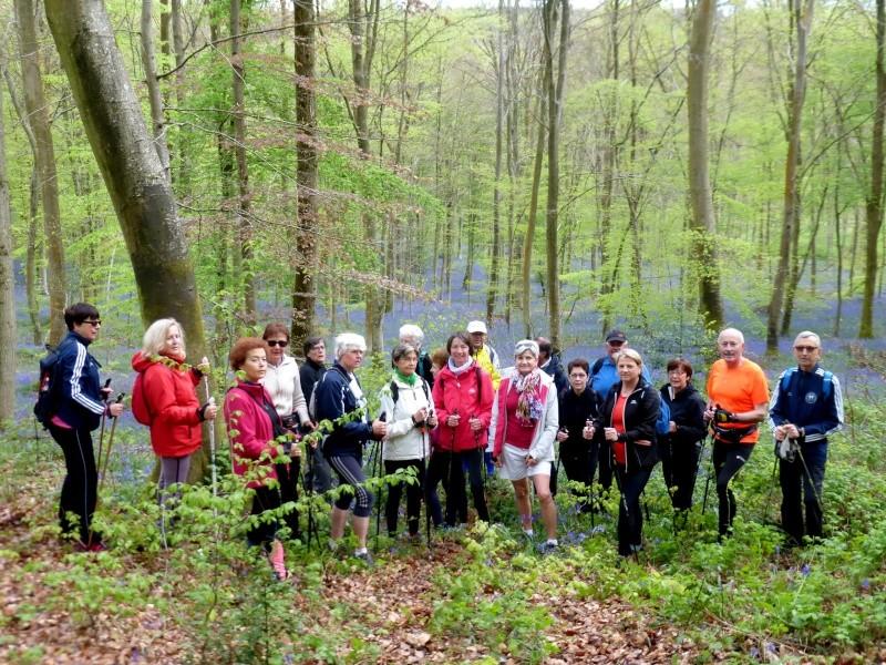 En forêt verte à la découverte des Violettes  2015-014