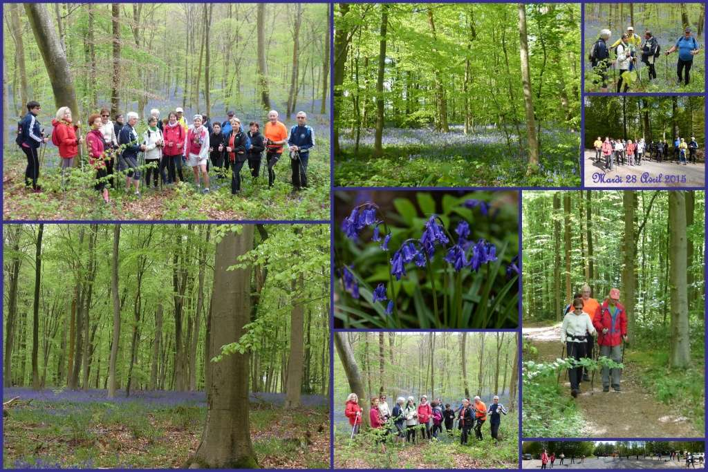 En forêt verte à la découverte des Violettes  2015-017