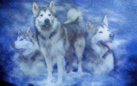 Les Loups - Page 2 13296910