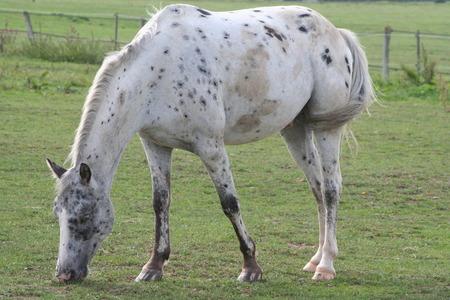 les chevaux  20090910