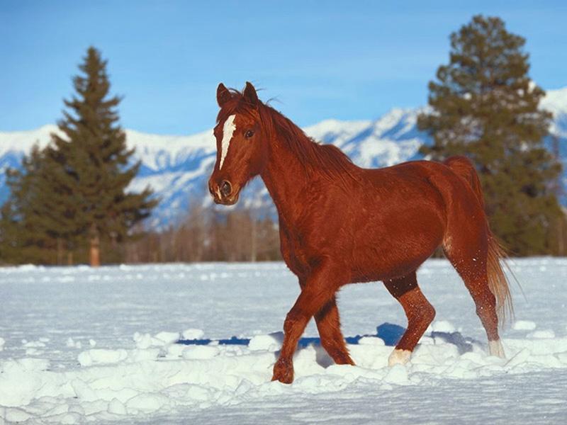 les chevaux  2176_010