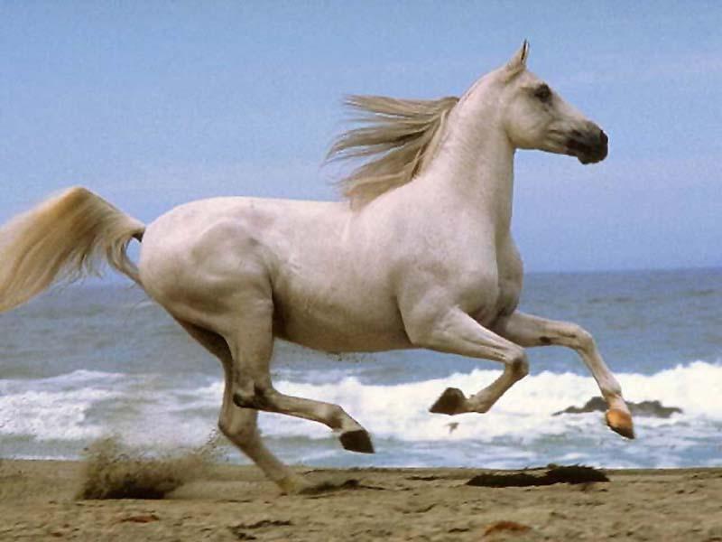 les chevaux  75370711