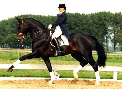 les chevaux  Dd812912