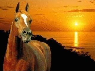 les chevaux  Yyjvp210