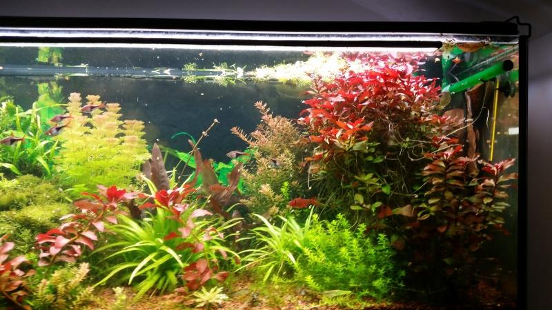 2 aquariums 240L : Spécifique Cacatuoides et Communautaire 20150312