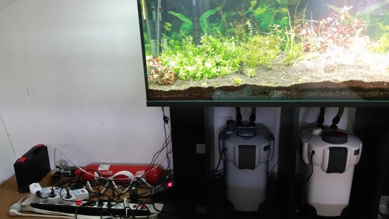 2 aquariums 240L : Spécifique Cacatuoides et Communautaire 20150436