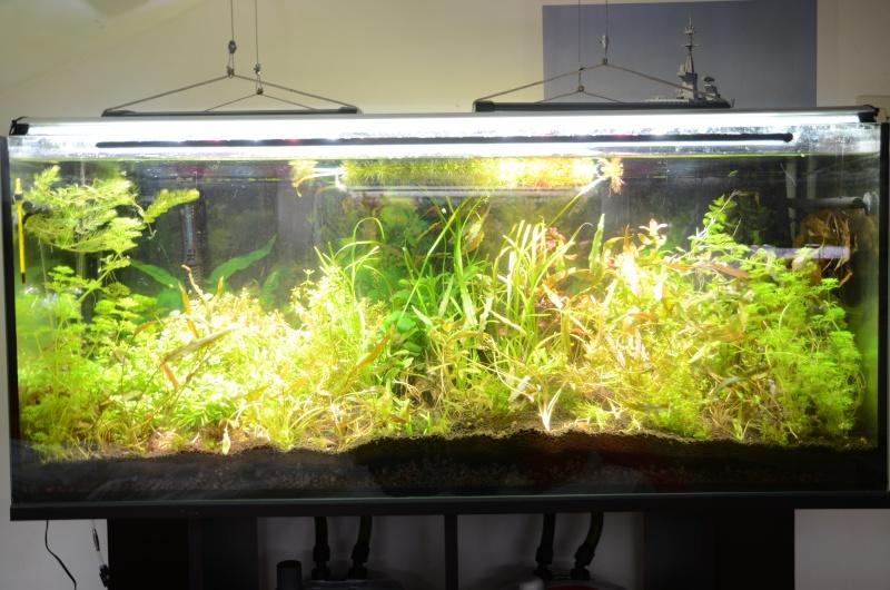 2 aquariums 240L : Spécifique Cacatuoides et Communautaire Dsc_3512