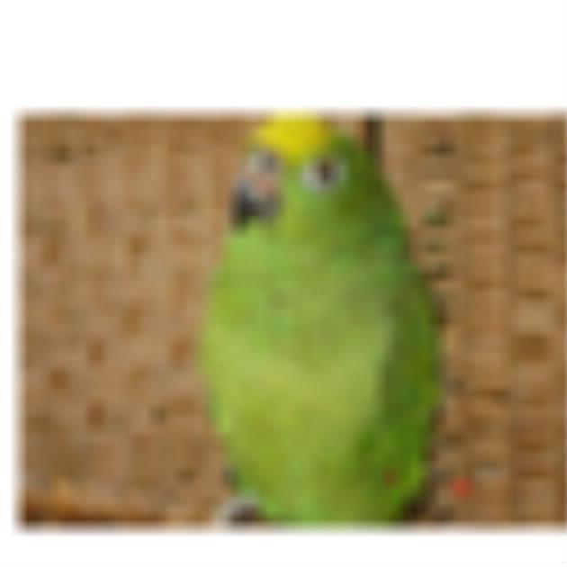 perroquets floués ! Bloggi22