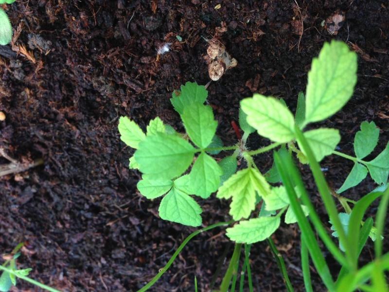 Riconoscimento pianta Img_2512
