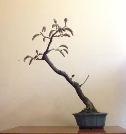 [W.I.P.] Glicine Floribunda Rosea - Pagina 2 Unname10