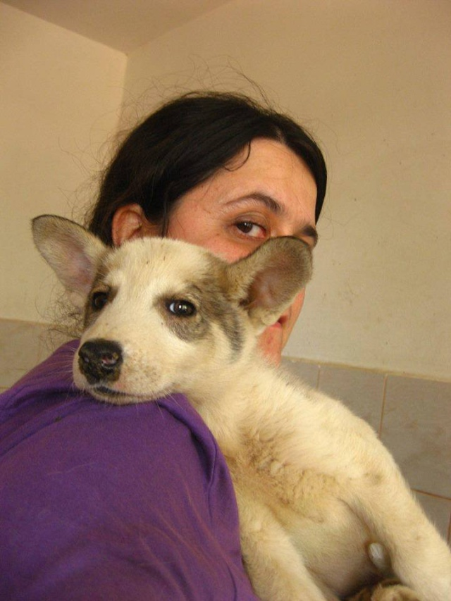 Ice 3 mois x husky Roumanie ASSO Suisse ADOPTE Ice10