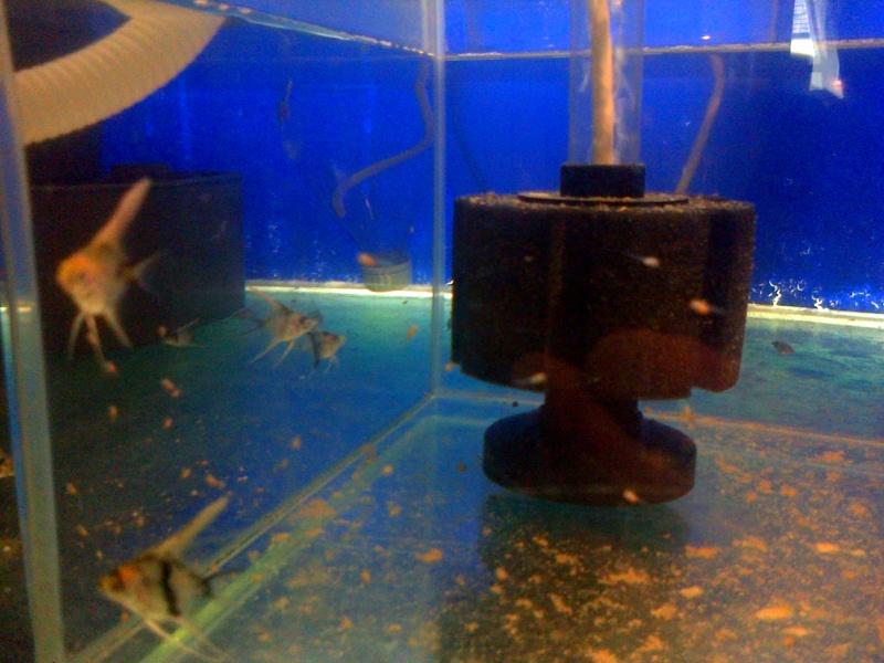 Deans Angels Fishroom Kirkle11