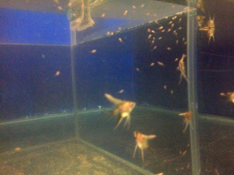Deans Angels Fishroom Kirkle12