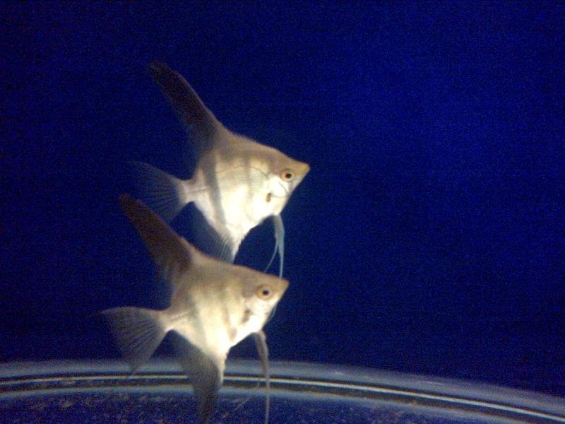 Deans Angels Fishroom Kirkle14