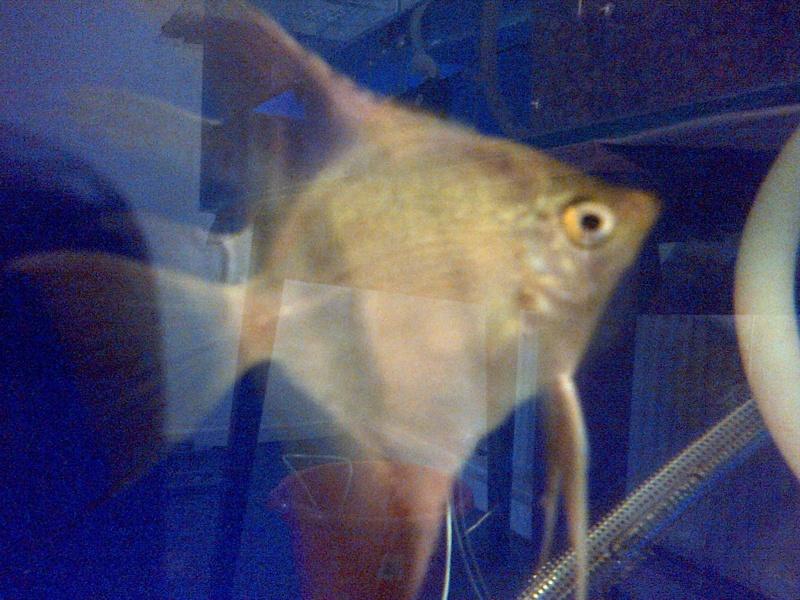 Deans Angels Fishroom Kirkle15