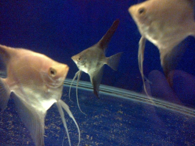 Deans Angels Fishroom Kirkle16