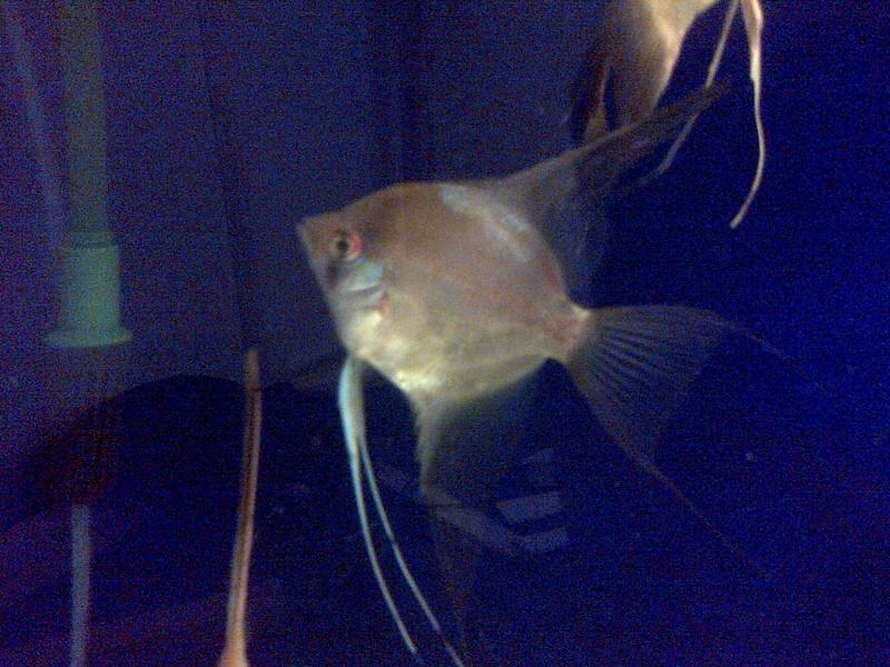 Deans Angels Fishroom Kirkle18