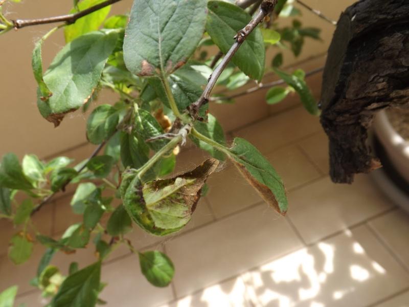 problema terriccio melo - Pagina 2 00511