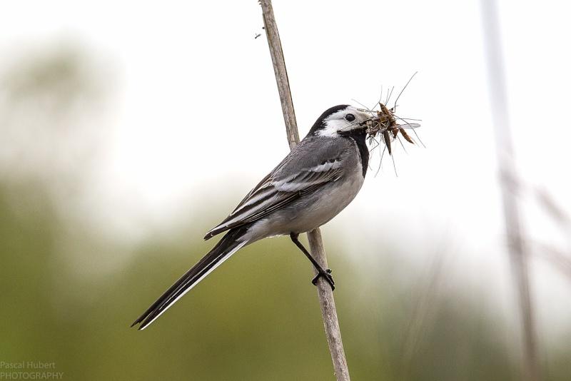 Oiseaux Remerschen avec objectif CANON Belux-13