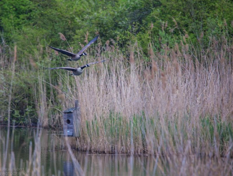 Oiseaux à Remerschen avec Tamron 150-600 Remers13