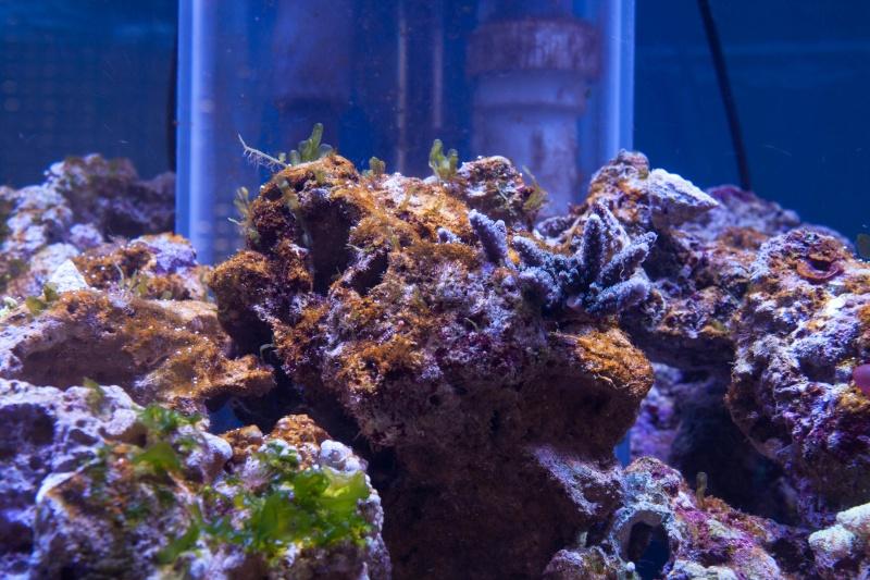 algues marron 05410