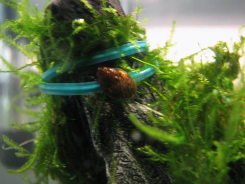 Questions sur les escargots Img_6214