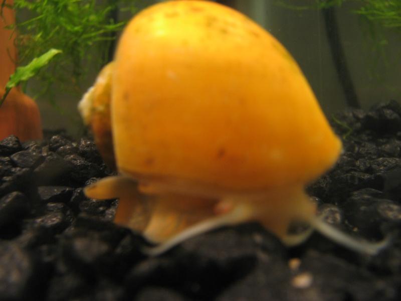 Questions sur les escargots Img_6315