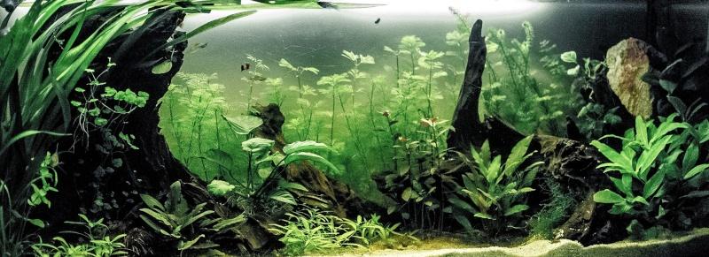 "Mon living""fish""room  11149810"