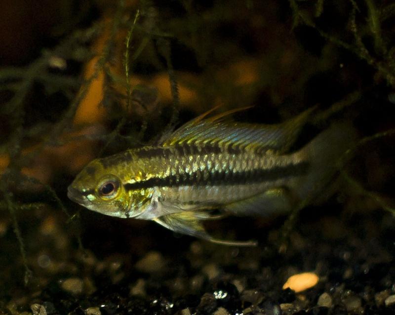 """Mon living""""fish""""room  _dsc0016"""
