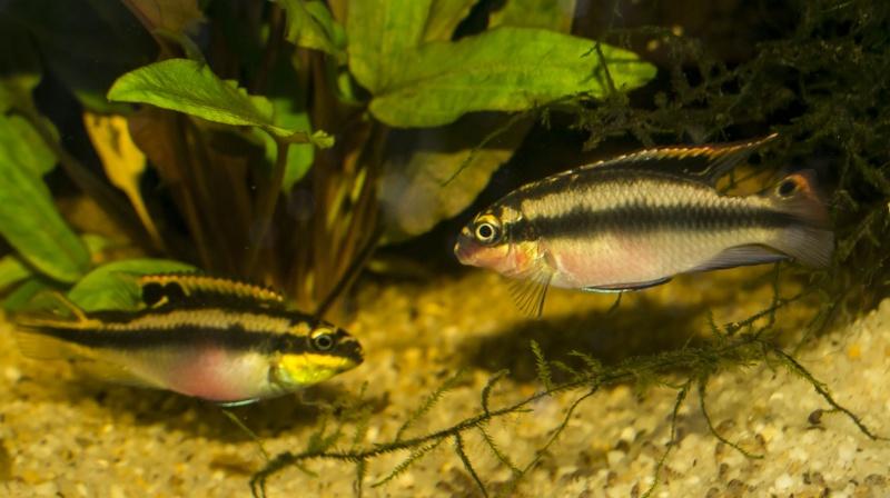 """Mon living""""fish""""room  _dsc0017"""