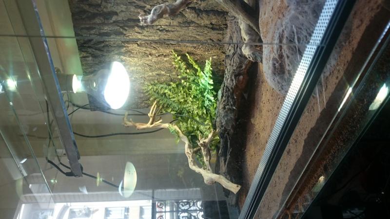 Nouveau terrarium - Besoin d'avis Dsc_0010