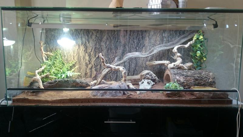 Nouveau terrarium - Besoin d'avis Dsc_0012