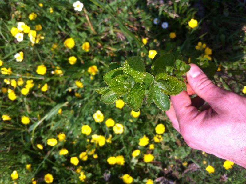 Identikit pianta Foto_111