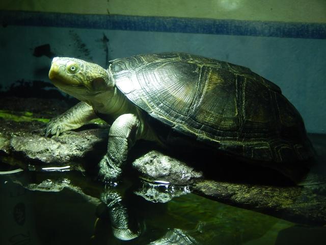 mes 2 petites  tortues - Page 2 Dscn4719