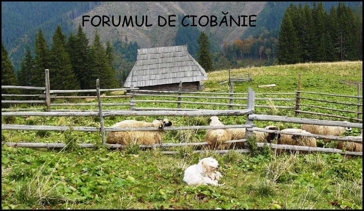 Forumul de ciobănie