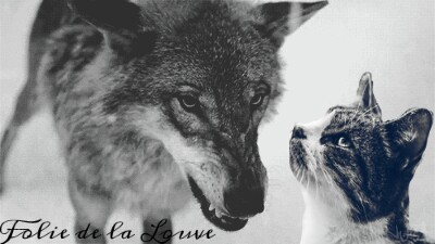 Nuage de Tigresse ( jojo,Tigrou et Tigresse) Folie_10