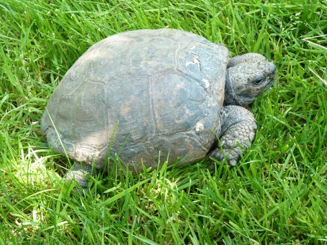 mademoiselle Lolotte et la famille tortue P1010710