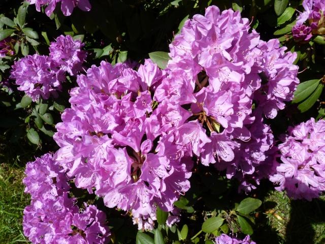 le joli mois de mai des fous jardiniers - Page 6 P1030023