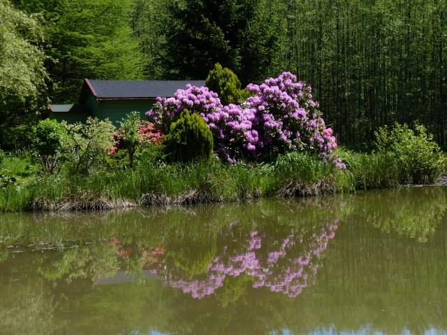 le joli mois de mai des fous jardiniers - Page 6 P1030110