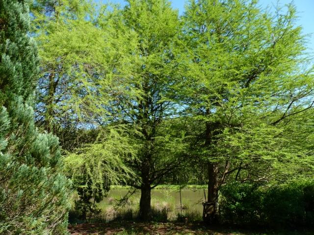 le joli mois de mai des fous jardiniers - Page 6 P1030115