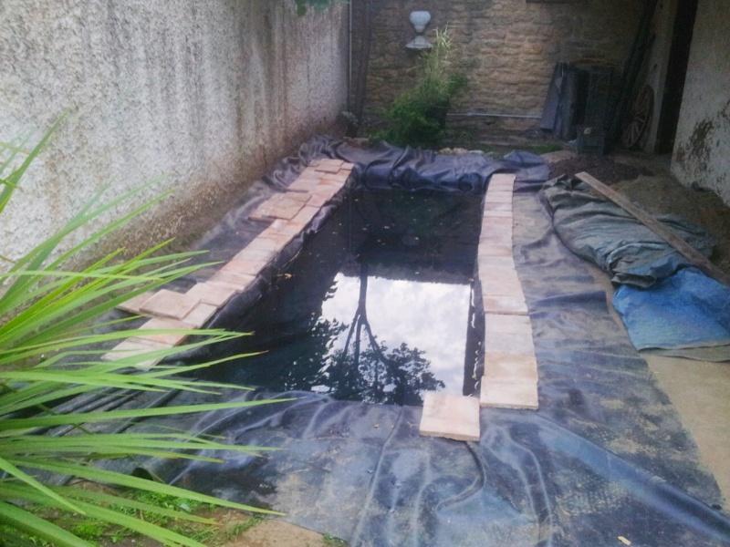 Mon bassin à Koï 2014-012