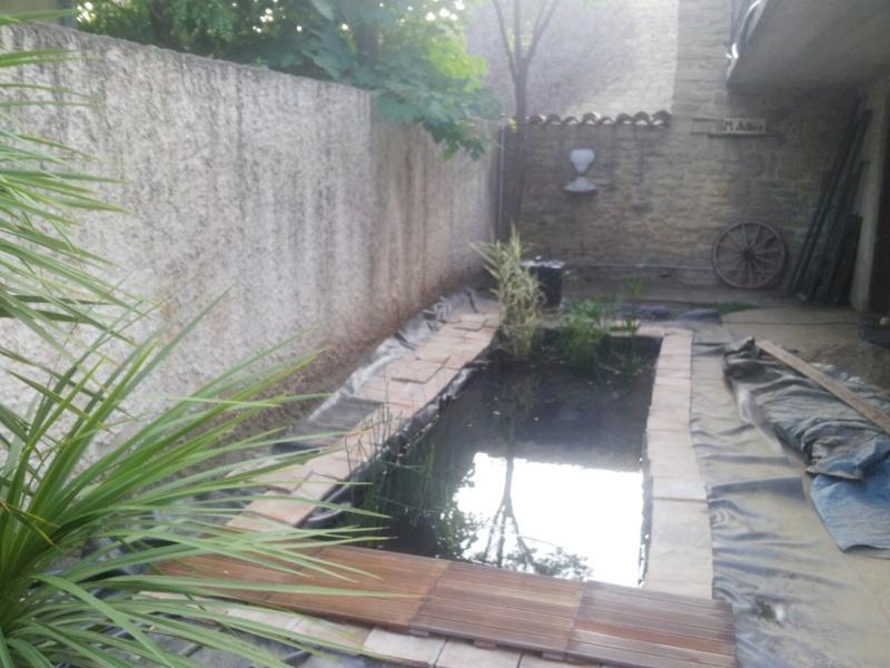 Mon bassin à Koï 2014-014