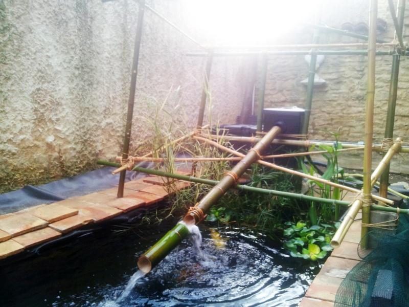 Mon bassin à Koï 2014-016