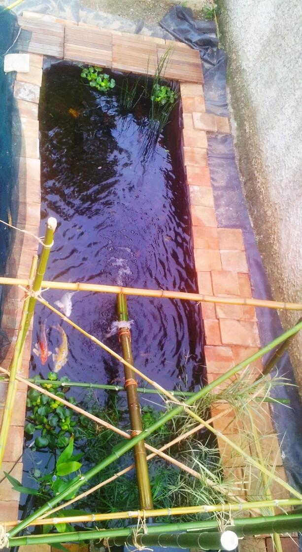 Mon bassin à Koï 2014-017
