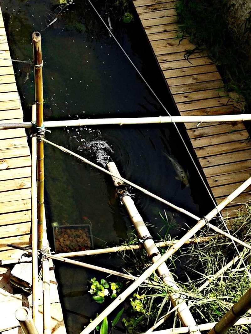 Mon bassin à Koï Picsar93