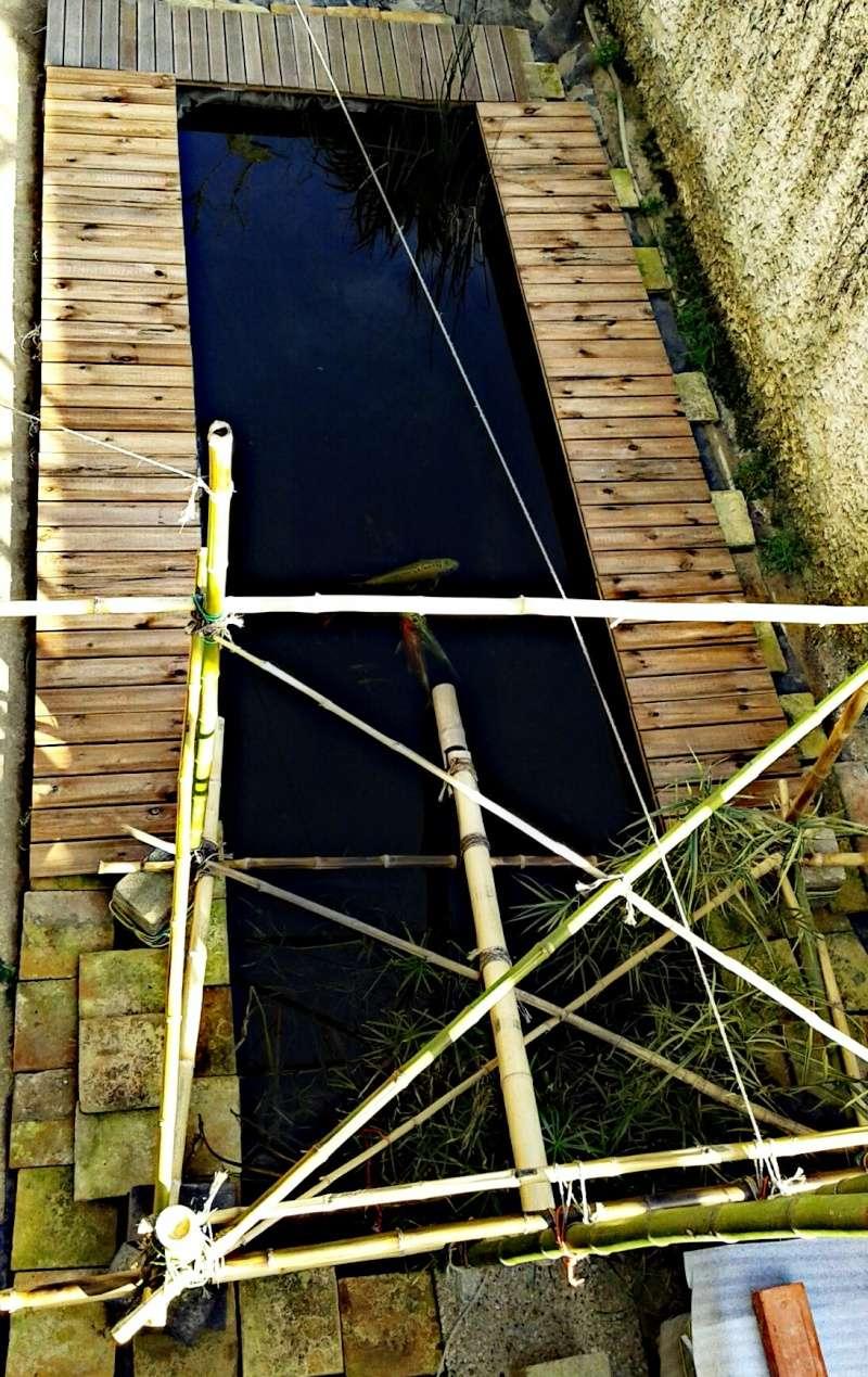 Mon bassin à Koï Picsar94