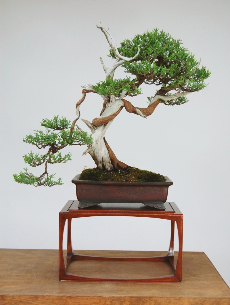 Mahogany stand for a Rocky Mountain Juniper Howard11